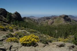 <strong>Gran Canaria (Canarian Islands) 2</strong>