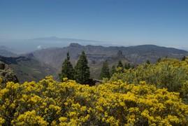 <strong>Gran Canaria (Canarian Islands) 9</strong>