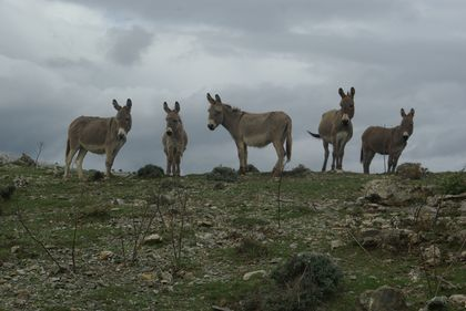 <strong>curious donkeys</strong>