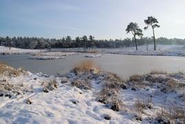 <strong>Hatertse Vennen in de winter</strong>